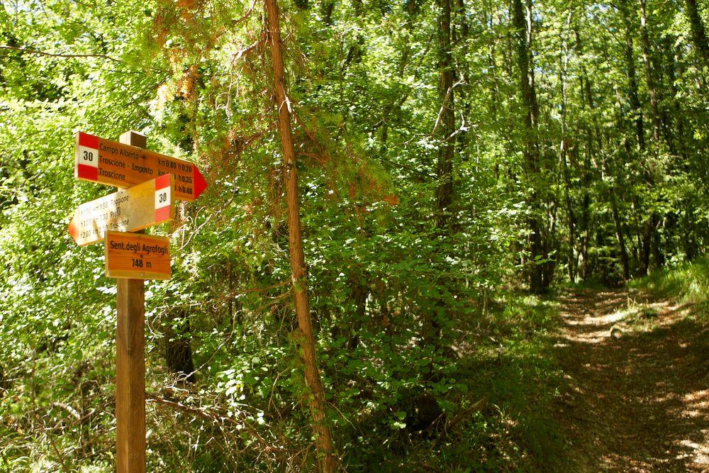 Agrofogli Trail